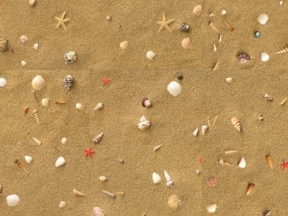 Korková podlaha Printcork Beach With Shells