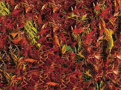 Korková podlaha Printcork Autumn Brake