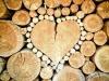 Paraziti, nezvaní hosté ve dřevě - jak si s nimi poradit?